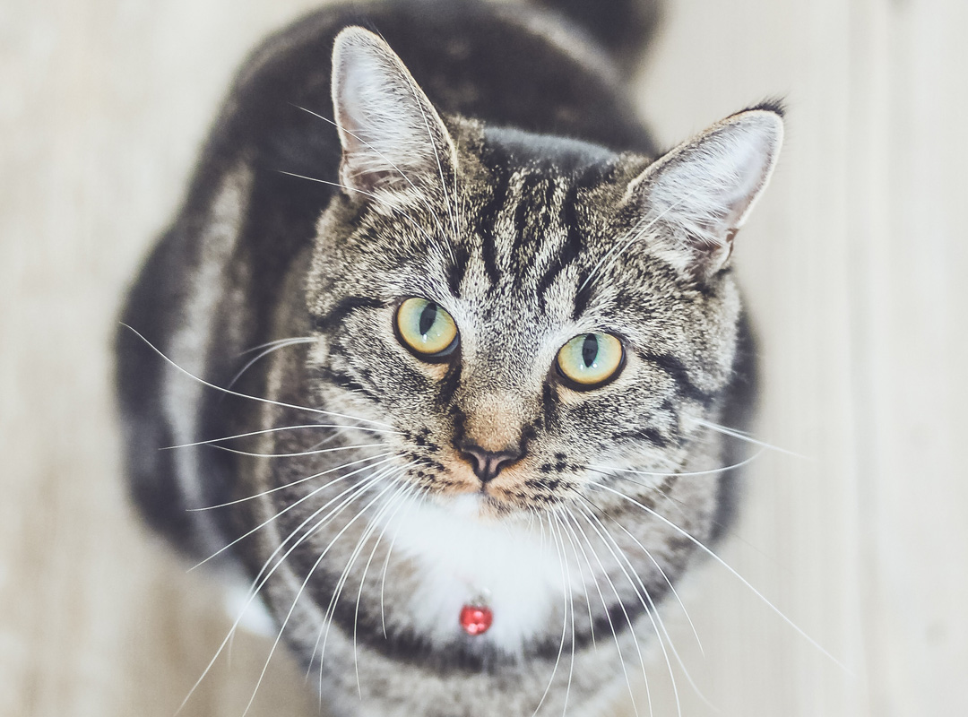 Hug your cat, and don't forget about pet insurance from Miller-Schuring Agency